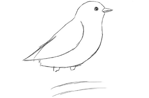 How to draw a bird in stages with a pencil